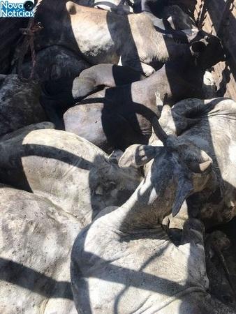 Left or right gado