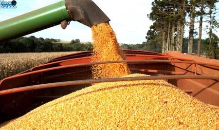 Left or right colheita de milho foto divulga o