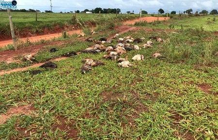 Left or right crime ambiental prefeitura recebe den ncia de descarte irregular de aves mortas
