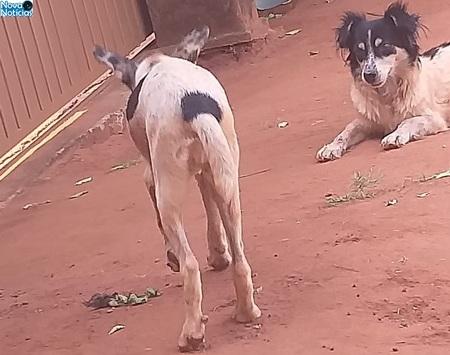 Left or right cachorros maus tratos bataguassu 20 de outubro de 2020