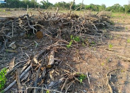 Left or right desmatamento teijim nova andradina 9 de novembro de 2020.jpeg1