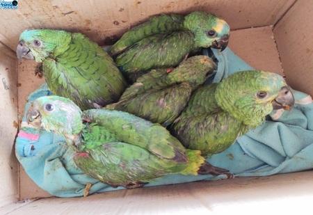 Left or right filhotes de papagaios jardim 12 de novembro de 2020