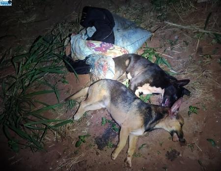 Left or right cahorros mortos dia 15 de julho