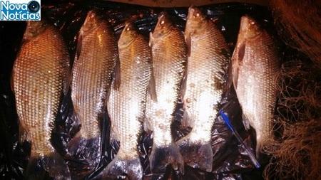 Left or right peixes